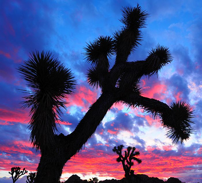Nr.52 – USA – Kalifornien – Radeln in der Wüste Kaliforniens