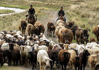 Kyrgyzstan shepherds