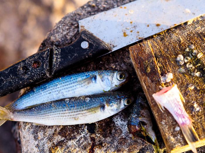 68 Baja California fish