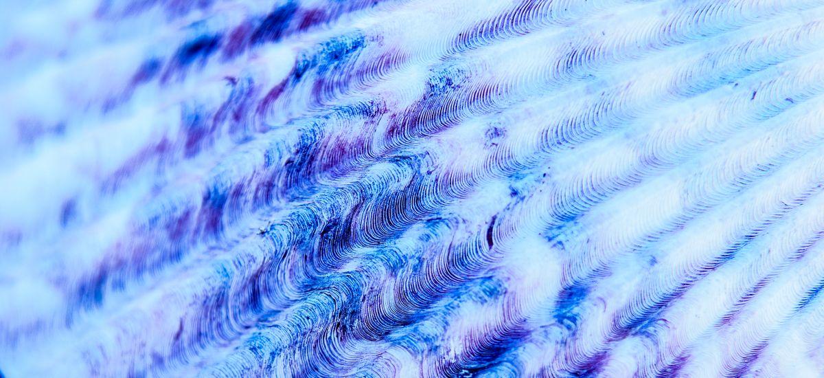 Muschel Detail